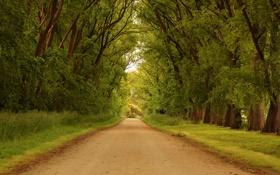 Картинка дорога, трава, деревья