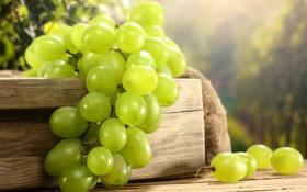 Обои белый, ягоды, виноград, гроздь, ящик, мешок