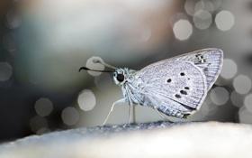 Картинка макро, поверхность, бабочка, крылья, фокус, профиль, боке