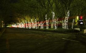 Обои аллея, photographer, fairy lights, Ruan Bezuidenhout, огни, деревья, след