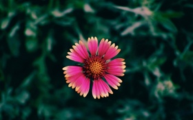 Картинка макро, Цветок, flower