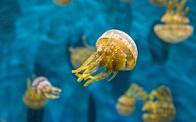 Обои вода, макро, медуза, подводный мир