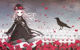 Обои цветы, забор, маки, шляпа, лепестки, девочка, ворон
