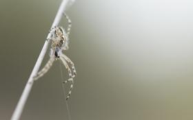 Картинка природа, фон, паук