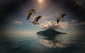 Картинка птицы, остров, полёт