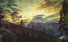 Картинка зима, лес, небо, sky, winter