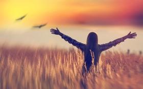 Картинка поле, свобода, птицы, девочка