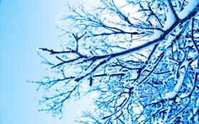Обои зима, снег, ветки, природа
