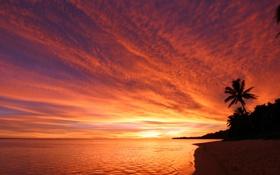Обои пальма, закат, берег, небо, море