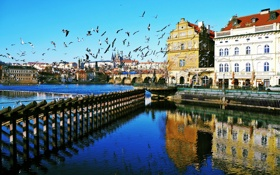 Картинка птицы, река, дома, Прага, Чехия, Влтава
