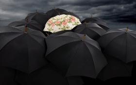 Обои зонты, контраст, black, светлый, contrast, черные, umbrellas