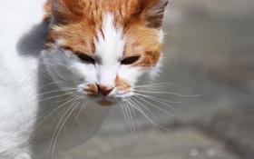Обои кошка, фон, улица