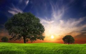 Картинка Солнце, Небо, Облака, Дерево, Трава, Деревья, Grass
