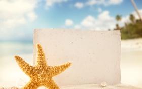 Обои песок, ракушки, пляж, тропики, морская звезда, море