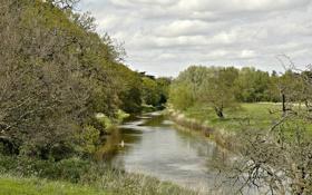 Картинка поле, лес, река, утка