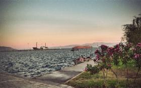 Обои море, цветок, дождь, лодка, корабль, куст, пристань