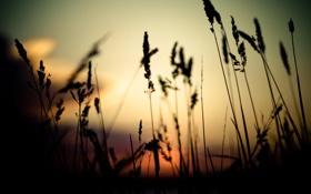 Картинка трава, закат, природа, ростки, вечер, тени, nature