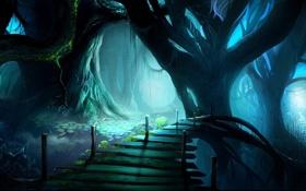 Обои паутина, неизвестность, болото, мост, деревья