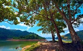 Обои деревья, озеро, остров, Малайзия, Malaysia, Kedah, Pedu Lake