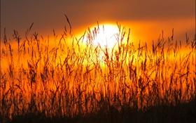 Картинка небо, трава, солнце, макро, закат, растение