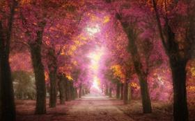 Картинка листья, деревья, парк, обработка, дорожка, розовые, аллея