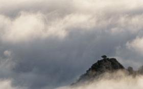 Картинка облака, природа, туман, дерево, скалы