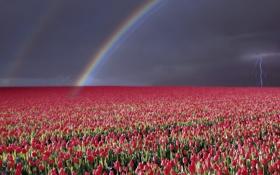Обои гроза, небо, пейзаж, цветы, природа, молния, радуга