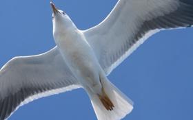 Обои белое, чайка, море