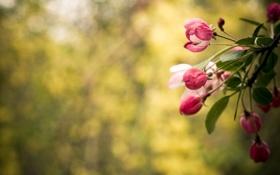 Картинка листья, цвета, цветы, природа, фон, стебли, обои