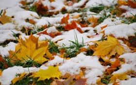 Картинка природа, листья, осень, снег