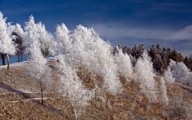 Обои зима, иней, деревья, пейзаж