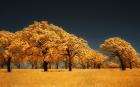 Картинка осень, деревья, желтый, золотой