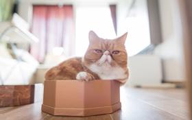 Картинка кот, коробка, экзот