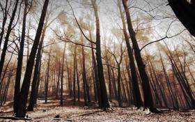 Обои зима, снег, деревья, природа, фотографии, зимний лес, зимние обои