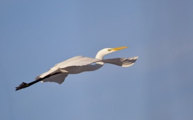 Обои птица, небо, полёт