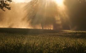 Обои трава, пруд, лебеди, солнечные лучи, дервья