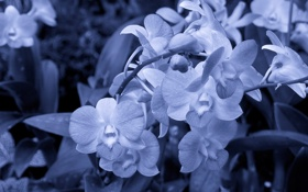 Обои стебли, лепестки, белые цветы, серо-голубой фон