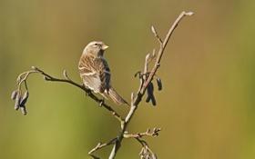 Картинка птица, ветка, почки, весна