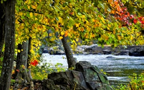 Картинка осень, листья, река, камни, дерево, поток