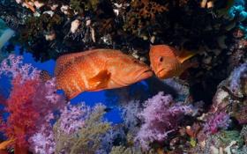 Обои море, океан, рыба, под водой, underwater, sea, ocean