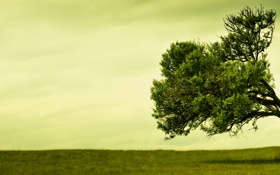 Обои зелень, поле, трава, природа, фото, дерево, панорама