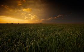 Картинка поле, лето, небо, трава, закат, тучи, природа