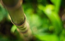 Обои ствол, зелень, бамбук