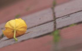 Обои цветок, макро, фон