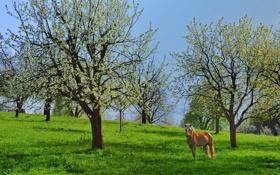 Обои деревья, конь, лето