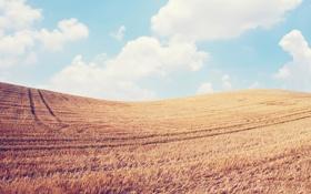 Картинка пшеница, поле, небо, облака, пейзаж, природа, колосья
