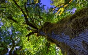 Картинка листья, мох, крона, небо, ствол, дерево
