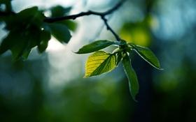 Картинка зелень, природа, зеленый, фото, обои, цвет, ветка