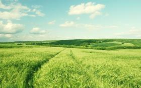 Картинка зелень, поле, небо, облака, деревья, пейзаж, природа