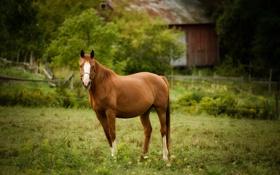 Обои лошадь, конь, пастбище